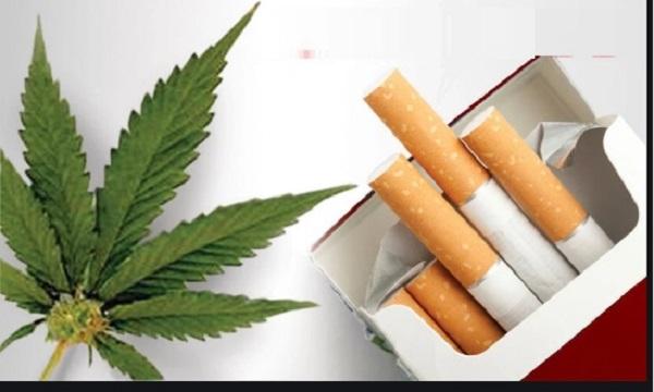 Hemp Vs Tobacco