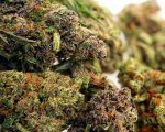 Purple Panties CBD Hemp Flower